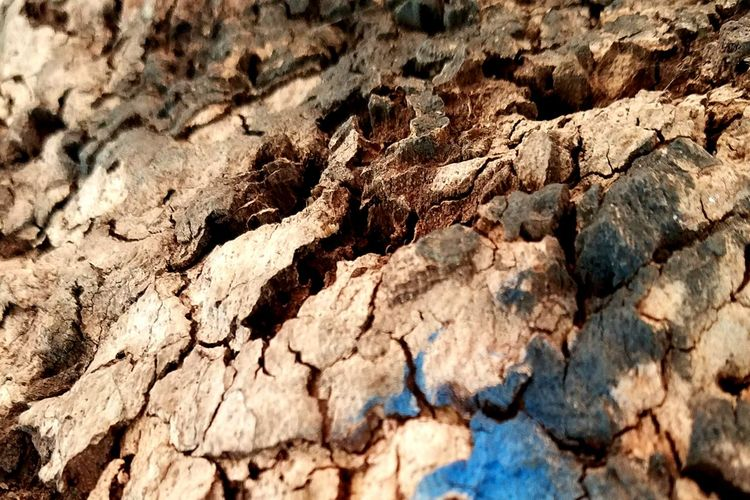 Textured  Full Frame Tree Trunk Close-up Wood - Material Backgrounds Weathered Cracked Growth Bark Tree Extreme Close-up Natural Condition Rough EyeEm Best Shots TakeoverContrast Taking Photos Popular Photos Beauty In Nature EyeEm Nature Lover