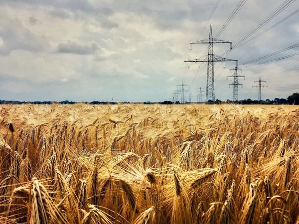 Wheat Field Germany Wheat Wheat Field Sky Cloud - Sky Technology Nature Electricity  Connection Field Cable Land Agriculture Landscape No People Plant Electricity Pylon Day