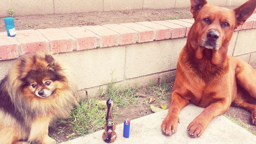 did someone say Smoke? Weed Ganja Mini Bubbler
