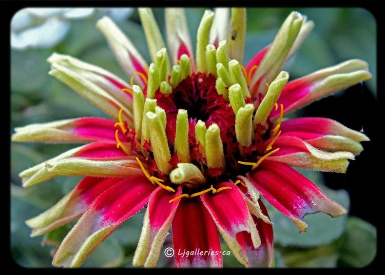 Onlyflowers All_shots Garden Macro_collection