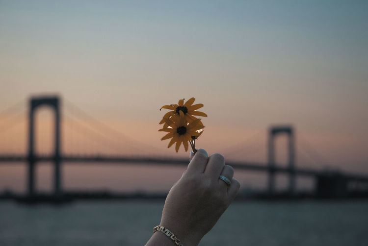 new tone Hand Human Hand Human Body Part One Person Flowering Plant Flower Holding Nature Sky Focus On Foreground Real People Finger Personal Perspective Human Finger Plant Body Part Unrecognizable Person Fragility Sunset Vulnerability  Outdoors Human Limb Flower Head