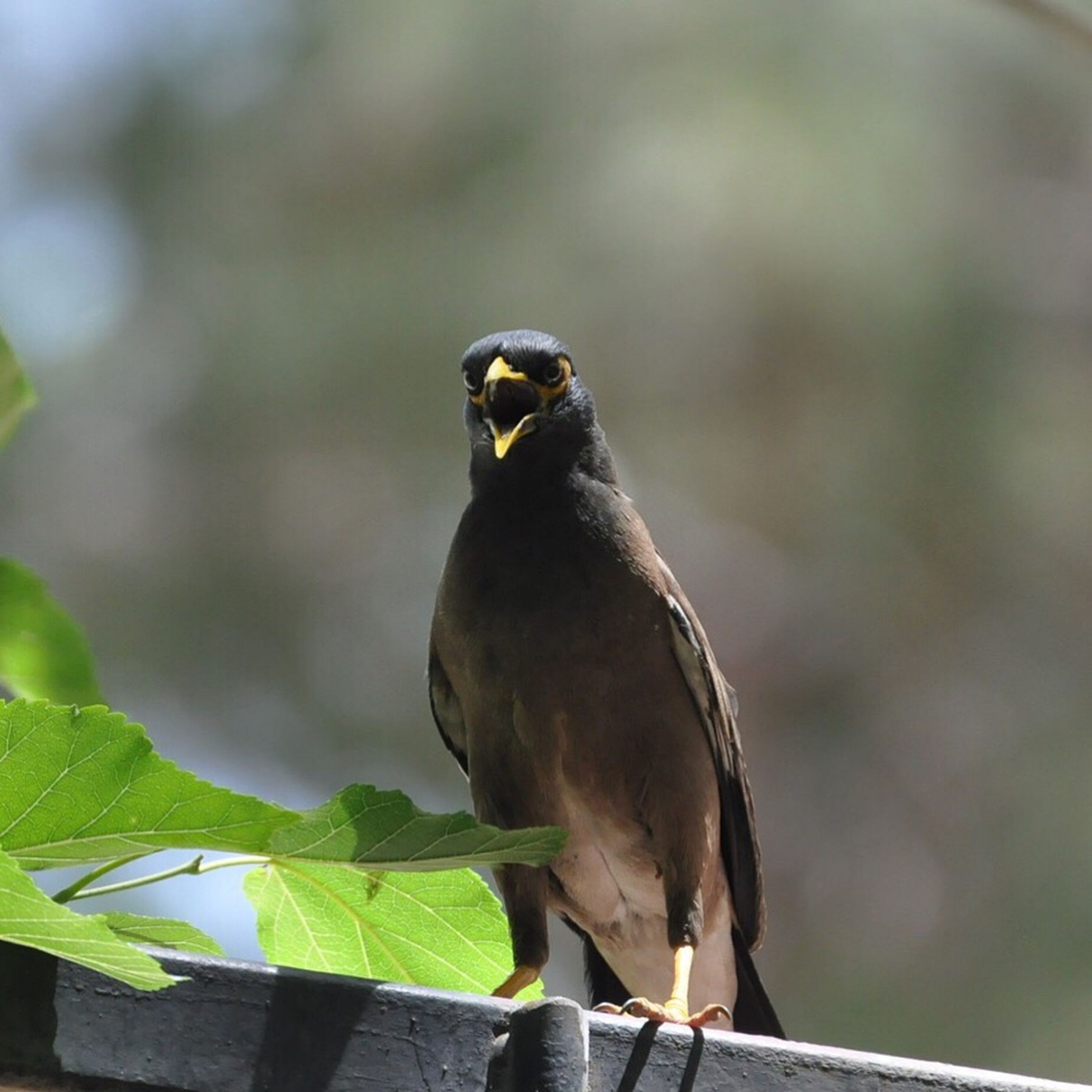 animal themes, one animal, bird, animals in the wild, focus on foreground, wildlife, perching, close-up, full length, nature, outdoors, side view, looking away, branch, day, beak, no people, zoology, black color, selective focus