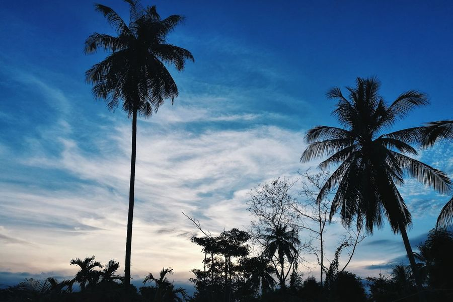 Tree Palm Tree Silhouette Low Angle View Cloud - Sky Sky No People Day Outdoors Nature Beauty In Nature