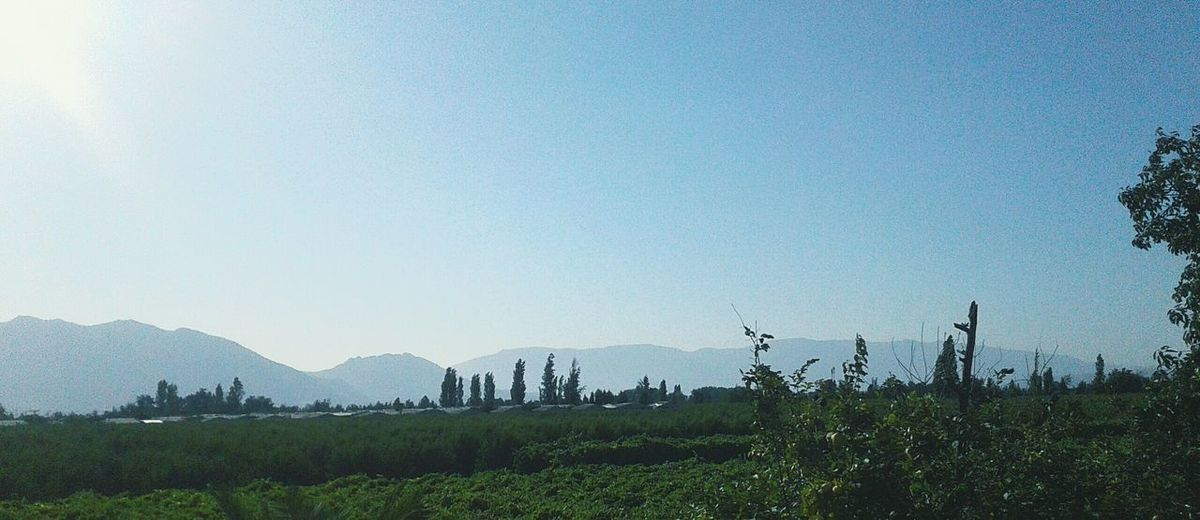First Eyeem Photo A Pretty View Outdoors Nature No People Landscape Chile Landscape Vegetation Green Nature Solar Light Green Color Trees Sky Clear Sky Rural Landscape Rural Scene Tranquility Silence Quiet Beauty In Nature Beautiful Day