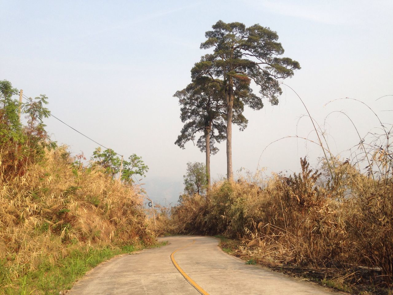 tree, growth, road, the way forward, nature, no people, plant, clear sky, outdoors, landscape, day, beauty in nature, sky