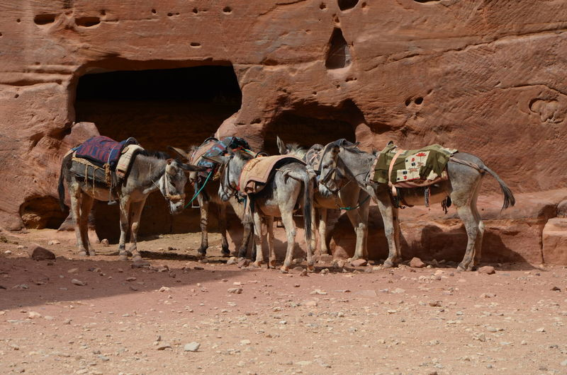View of horse in desert