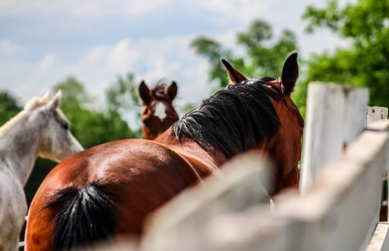 Horses in ranch against sky blurred background