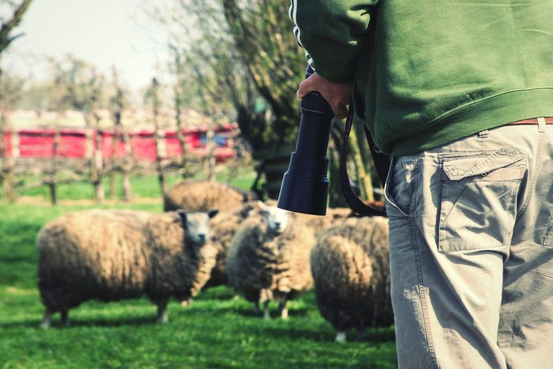 Photography Photographer Man From Behind Man Sheep Nature Close-up Farm Camera Green Day Outdoors People Animals Animal Animal Themes Field Real People Livestock Mammal One Person Grass Agriculture Men Cattle Flock Of Sheep Farm Animal Ranch Livestock Agriculture The Great Outdoors - 2018 EyeEm Awards The Traveler - 2018 EyeEm Awards My Best Photo