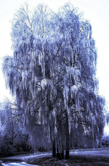 Beauty In Nature Day Ice Nature No People Outdoors Sky Steißlingen Weeping Willow Tree Winter