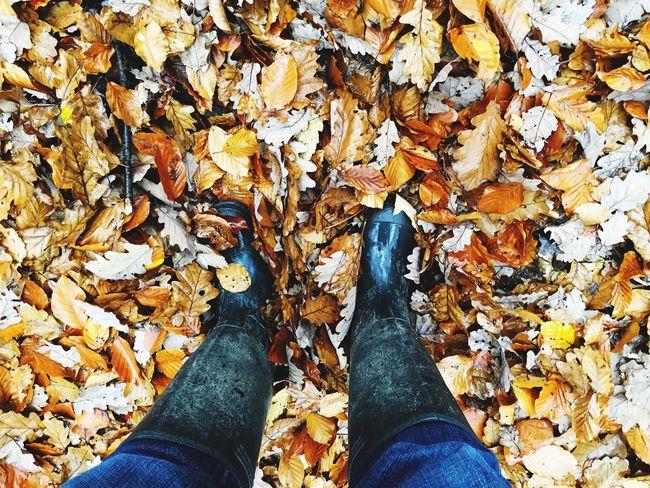 Autumn Autumn Leaves Autumn Colors