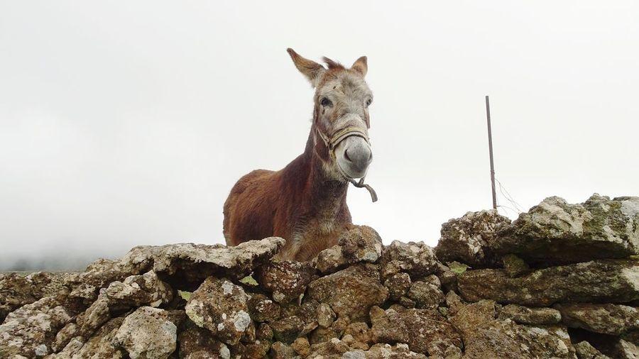 Donkey Grau