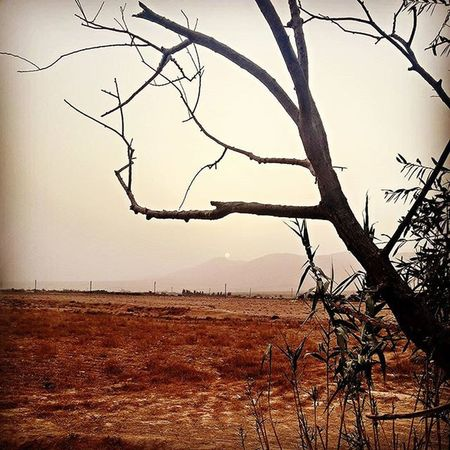 Sandstorm Dusty Sunrise Kaa Huntingseason