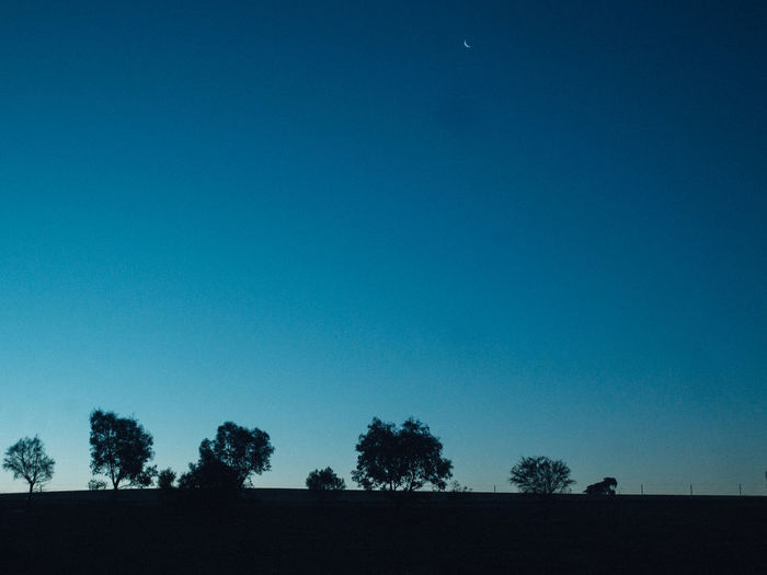 Sky Tree Plant Clear Sky Blue Copy Space Tranquility Tranquil Scene Silhouette Nature Beauty In Nature No People Landscape Environment Scenics - Nature Land Moon Field Growth Outdoors