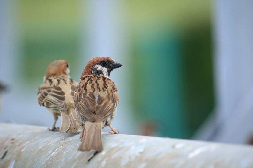 すずめの想い Nature_collection 繋がる想い 妄想ふぇち 癒しの野鳥