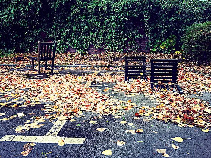 Three Chairs in a Car Park Surrounded By Leaves Three Chairs Autumn Rubbish Urban Pub Car Park Round The Back
