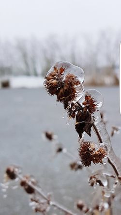 Frozen nature... Frozen Plant Outdoor Photography Lake Wintertime Snow Winter Close-up