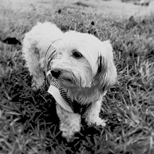 Pets Perro Animals RePicture Travel Angelesde4patas Blackandwhite Adoptanocompres Mascota Lupe