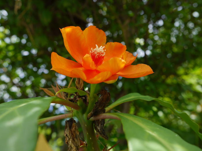 Beauty In Nature Blooming Flower Flower Head Fragility Freshness Nature Orange Color Petal Plant Rose Cactus EyeEmFlower EyeEm Nature Lover