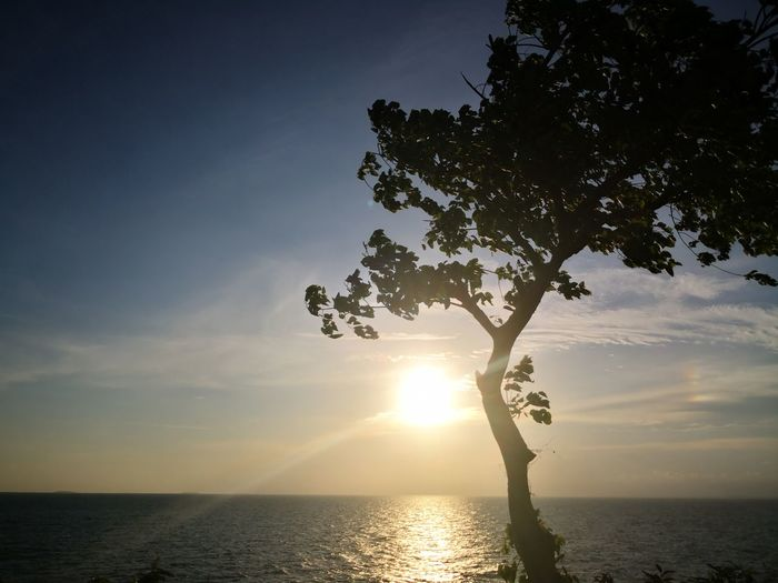Silhouette tree by sea against sky during sunset
