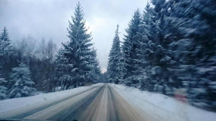Cold Temperature Snow Winter Tree Snowing Forest Pinaceae Pine Tree Road Landscape Snowflake Pine Woodland Nature The Way Forward Frozen No People Scenics Beauty In Nature Sky Outdoors