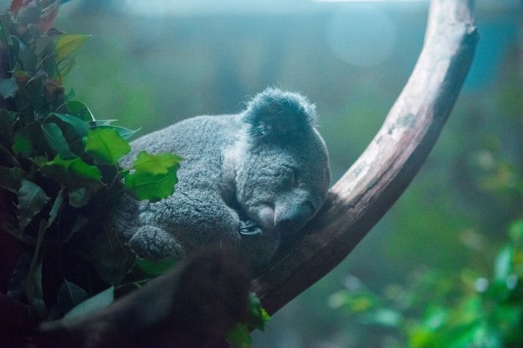 View of an animal sleeping on branch