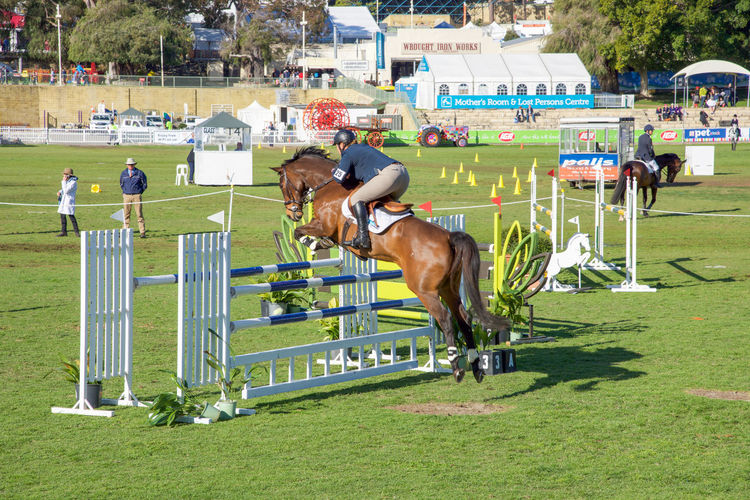 Rider and chestnut brown horse in the show jumping competition at the 2016 Perth Royal Show in Claremont, Western Australia. 2016 Animal Chestnut Brown Claremont Show Claremont Showgrounds Combination Competition Equestrian Equestrian Life Farm Animal Fence Horse Horse Jumping Horseback Riding Obstacle Perth Royal Show Rails Rider Riding Saddle Show Jumping Sport Triple Western Australia Working Animal