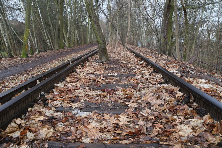 Tree Rail Transportation Forest Plant Direction Railroad Track Transportation Track Land The Way Forward Day Plant Part No People Leaf Autumn Nature Diminishing Perspective Tranquility Tree Trunk Trunk Change Outdoors WoodLand Leaves Parallel