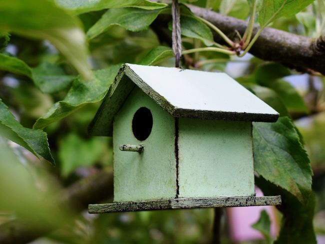 Backyardphotography Wood - Material Birdhouse Tree Weathered 🌿☘️🌲🍃 NIKON D5300
