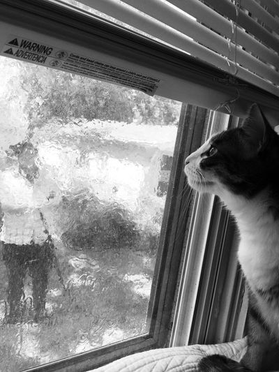 Window Glass - Material One Person Transparent Real People Indoors  Looking Looking Through Window Close-up Portrait One Animal Domestic Domestic Animals