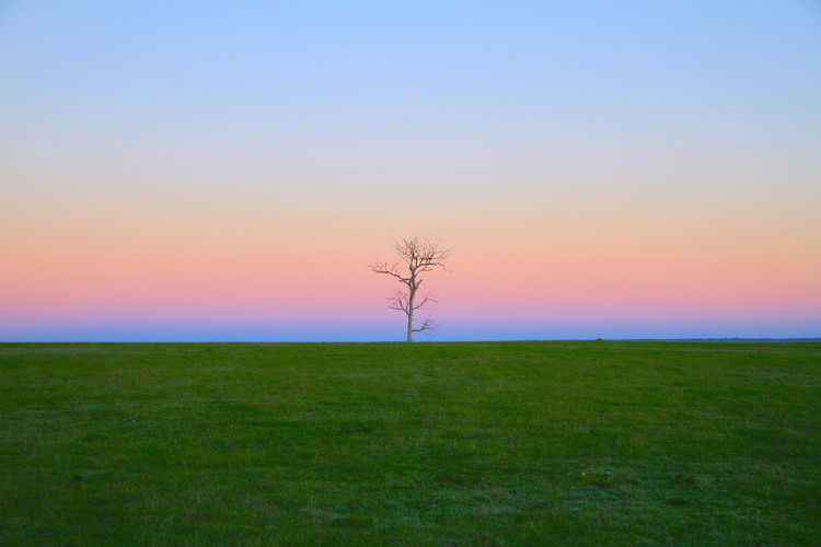 I love the solitude, but strength and resilience of this tree on a walk this morning just before sunrise in Kendenup, Western Australia. Serenity Bare Tree Clear Sky Environment Field Grass Horizon Isolated Land Landscape Lonelytree Nature No People Non-urban Scene Outdoors Resilience  Scenics - Nature Sky Solitude Strength Sunrise Sunset Tranquil Scene Tranquility Tree