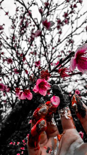•Gratidão• Creativity Nature_collection Green Color Flower Plant Life