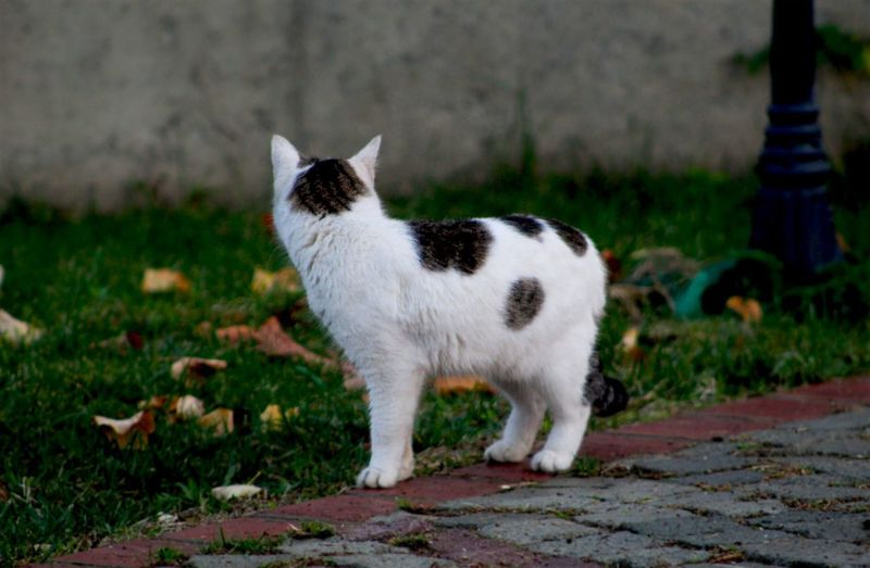 Side view of white cat standing against plants