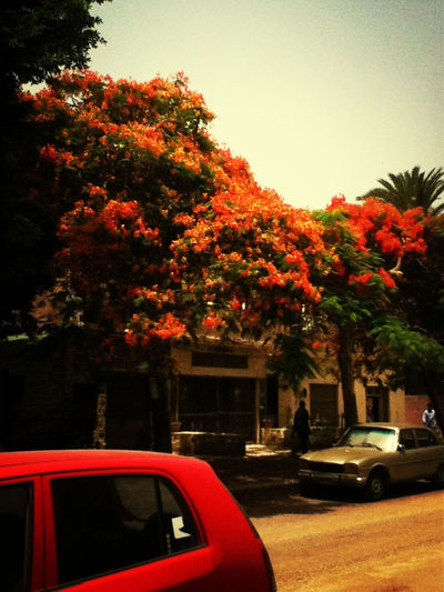 Walking Around Red Maadi Cairo