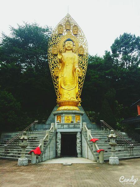 Suwon Korea Bouddha  Bouddhisme Temple Alone Captured Moment Gold