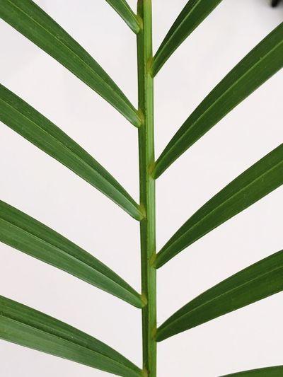 Leafmania