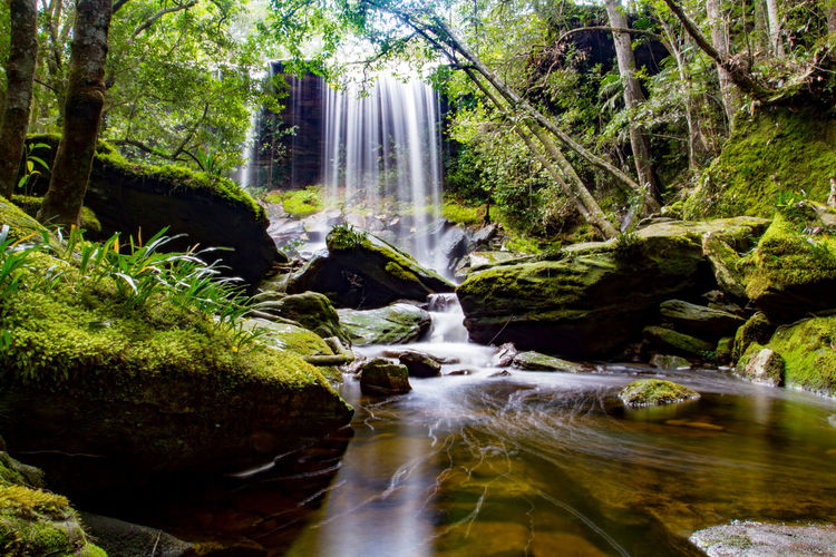 Scenic View Of Waterfall In Rainforest