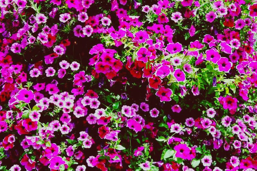 Natural Beauty Nature_collection Open Edit Nature_perfection Seto Flowers Flores Y Más Flores Flowers,Plants & Garden Nature Photography