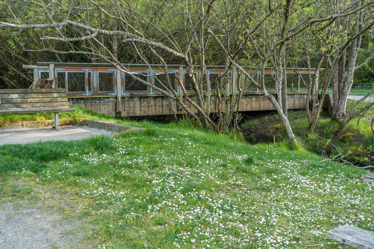 A walking bridge at Dash Point State Park in Washington State. Washington State Architecture Beauty In Nature Bridge Built Structure Connection Dash Point Day Flowing Water Forest Grass Green Color Growth Land Nature No People Outdoors Plant Tranquil Scene Tranquility Tree Water