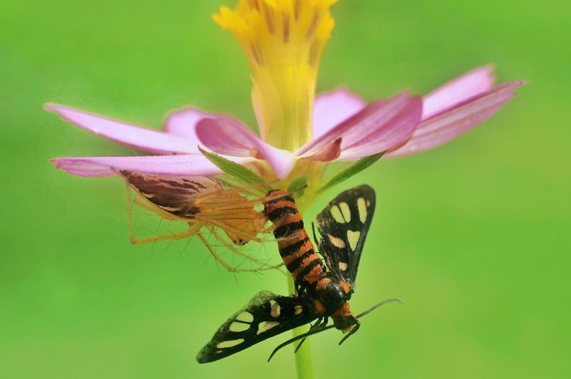 Dinner 😋😋 Insect No People Animals In The Wild Nature Flower Animal Wildlife Leaf Animal Themes Conformity Plant Full Length Fragility Freshness Outdoors Beauty In Nature Perching Close-up Day Butterfly - Insect Macro Macroclique Spider Macro Insects Macroworld_tr Macrophotography