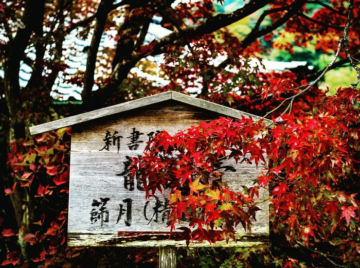 Day Outdoors No People Text Communication Branch Fall Beauty Fall Leaves Autumn Autumn Colors Autumn Leaves Japan Asian  Kanji Asian Text Japanese Text Temple Tenryu-ji Temple Kyoto Tenryuji Tenryuu-ji Temple Japanese Autumn Japanese Maple Tree