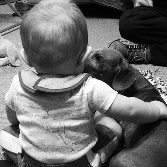 Best friends Babylife Dog Weiner Dachshund