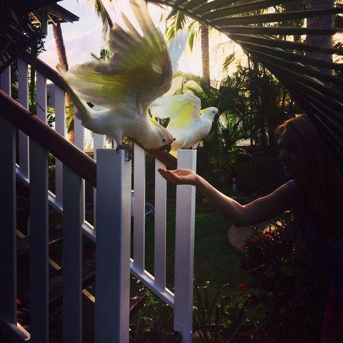 Sydney Day Sunset Parrot Kakadu Sunny Love Airlie Beach Whitsunday Islands