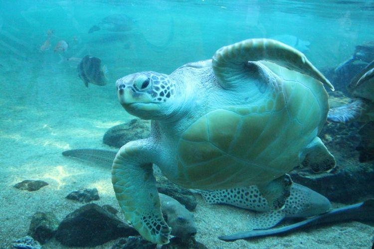 Close-up of sea turtle underwater