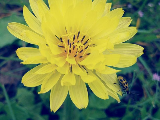 Close-up Bug On A Flower My Favorite Photo Yellow Flower Colour Of Life The Week On EyeEm Paint The Town Yellow