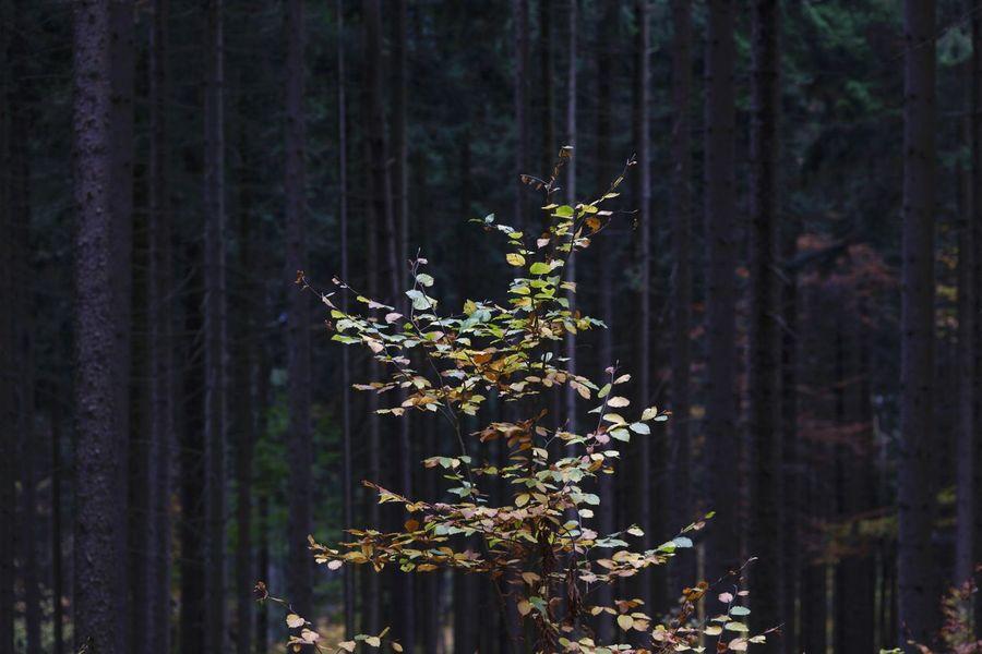 Autumn,Germany Autumn Autumn Collection Autumn Colors Autumn Leaves Herbststimmung Herbstzeit Nature Spaziergang Durch Den Herbst. Wanderung Wandern Baum Bäume Tree Fallen Gefällt Gestürzt Moos Bemoost Grün Hiking Wood Tree Trunk Autumn🍁🍁🍁 Day Herbstblatt Herbstblätter Natur Nature Nature_collection No People Oktober Outdoors Park