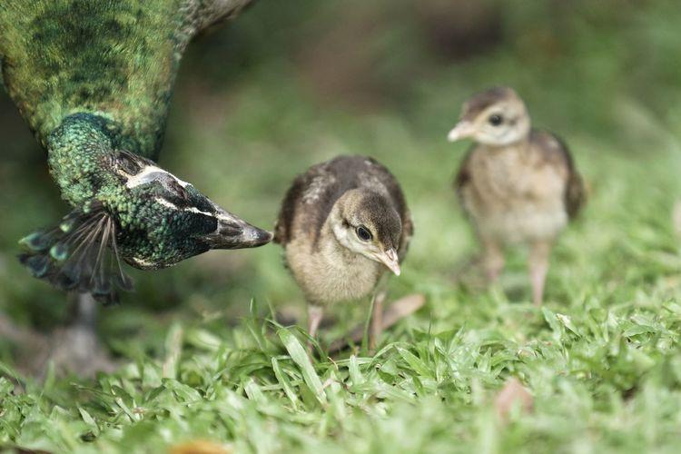 Close-up of birds on field