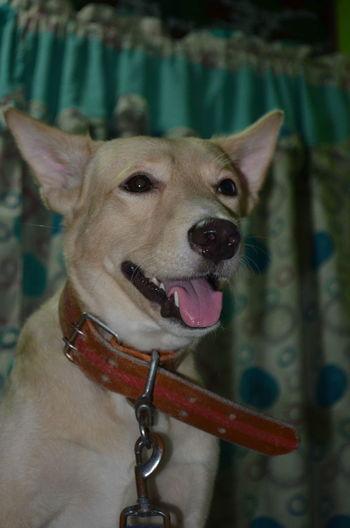 Dog Animal Themes Doglover Animalphoto Animal Lover Dogofeyeem Eyeemdoglover I miss you Toby 🐶 ❤💚💗 Pet Portraits