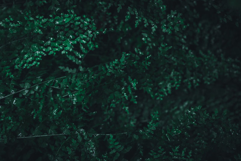 Close-up of fresh green leaf in forest