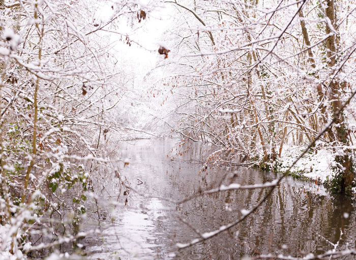 Tree Plant Cold Temperature Nature Winter Snow No People Branch Tranquility Bare Tree Day Water Outdoors Beauty In Nature Forest Land Growth Frozen Rain Snowing