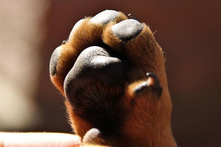 Pata e perro Animal Themes Close-up Day Domestic Animals Indoors  Mammal No People One Animal Pata Perro Pets